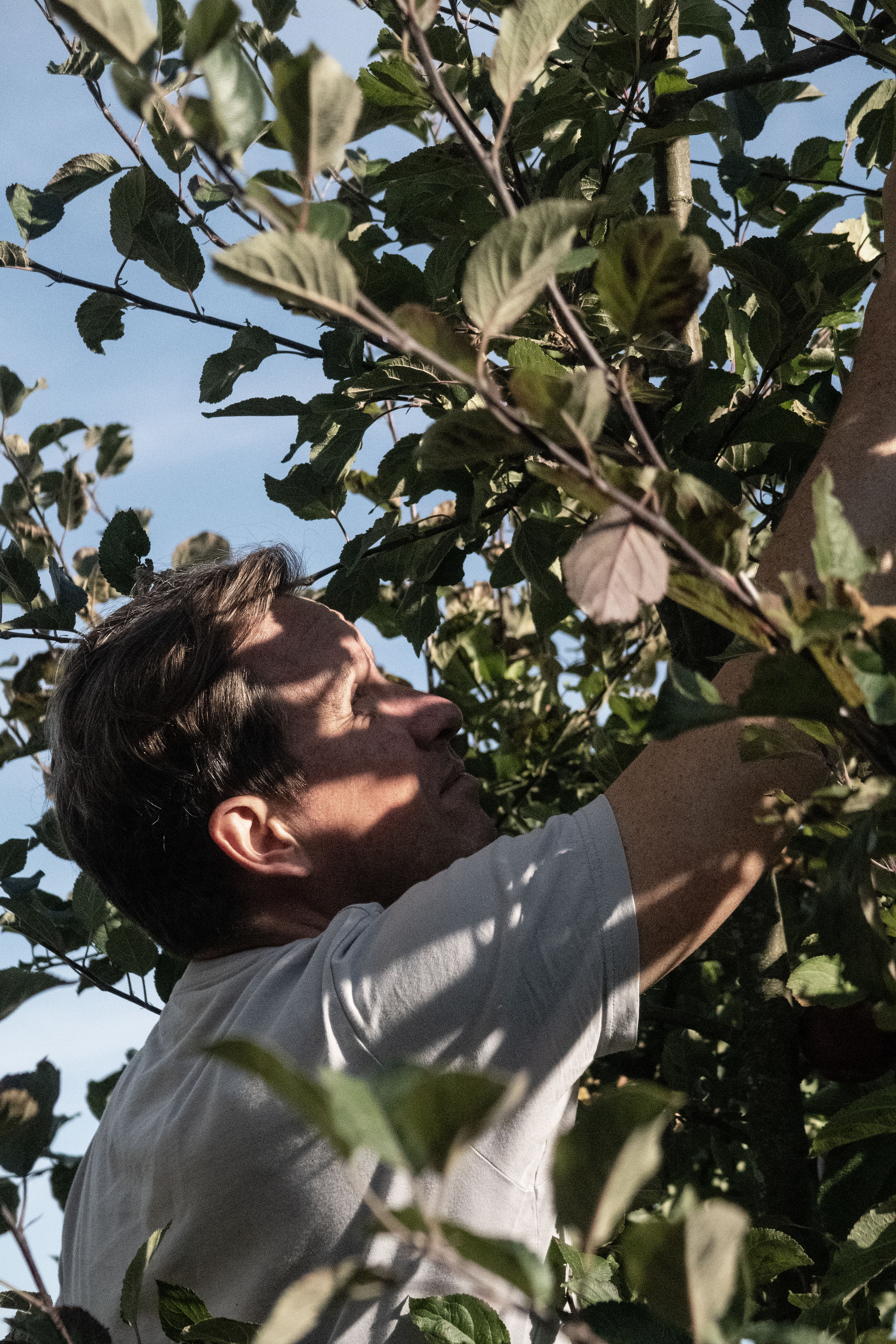 TypeO Journal Harvesting Apples with TypeO